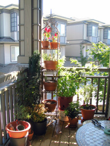 Easy Edible Container Plants For Balconies & Small Gardens