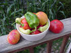 front page veggies-in-bowl-e1413595508721_4